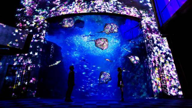 Flowers-and-Fish--Enoshima-Aquarium-Big-Sagami-Bay-Tank+